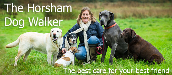 The Horsham Dog Walker